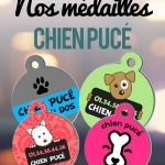 Medaille chat red dingo - medaille pour chat st jean sur richelieu - medaille pour chat montreal